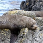 Red Rocks Seal Colony – Wellington Day Walk